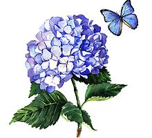 Blue hydrangea and butterfly by Anna  Yudina