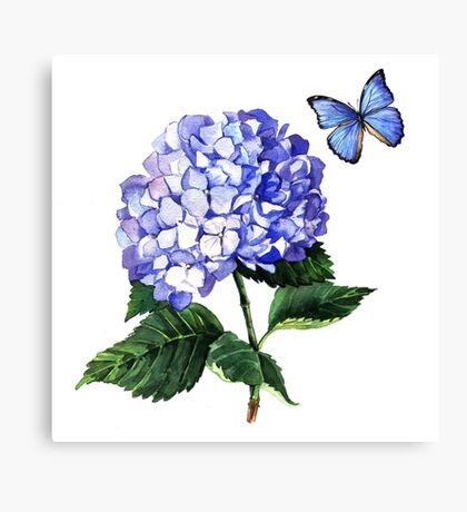 Blue hydrangea and butterfly Canvas Print