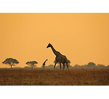 Giraffe Silhouette - African Wildlife Background - Magnificent Freedom Photographic Print
