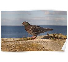 Pigeon On Pier Wall Poster
