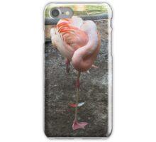 Sleeping Flamingo  iPhone Case/Skin