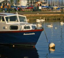 Swans And Annaconda Sticker