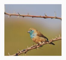 Blue Waxbill - African Wild Bird Background - Bliss of Colors in Nature One Piece - Short Sleeve