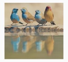 Exotic Colorful Wild Birds from Africa - Blue and Violet-eared Waxbill - Colors in Nature One Piece - Short Sleeve