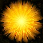 Dandelion Fire by Mandy Collins