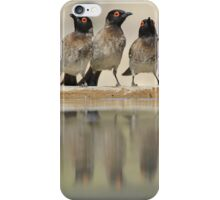 Colorful Exotic Wild Birds from Africa - Water is Life - Bulbul and Weaver iPhone Case/Skin