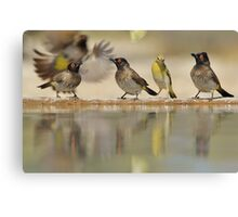 Colors in Nature - Colorful Wild Birds from Africa - Reflections of Life Canvas Print