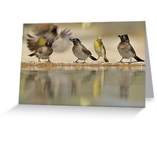 Colors in Nature - Colorful Wild Birds from Africa - Reflections of Life Greeting Card