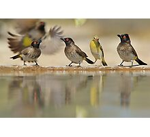 Colors in Nature - Colorful Wild Birds from Africa - Reflections of Life Photographic Print