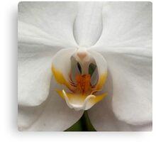Orchid..Reverance, Humility, Innocence Metal Print