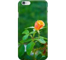 Soft little Rose Bud... iPhone Case/Skin