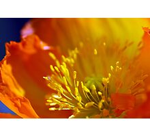 Orange Poppy in February 2 Photographic Print