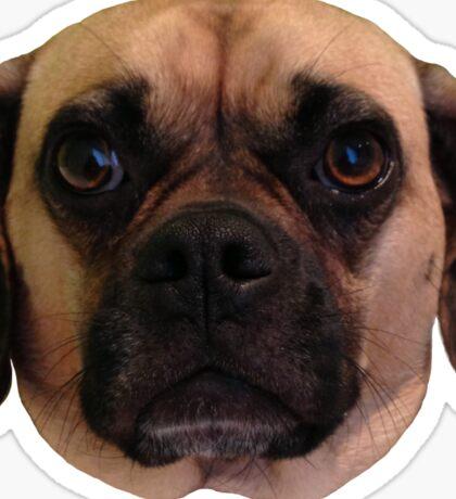 zoe the puggle Sticker