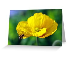 Yellow Poppy in February 2 Greeting Card