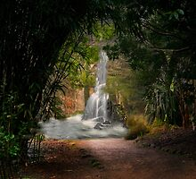 The  Waterfall by Irene  Burdell