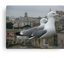 See gulls in Rome! Canvas Print