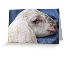 lamb with shepherd Greeting Card