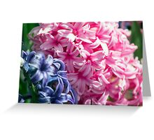 Spring Flower Series 25 Greeting Card