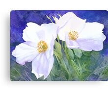 White rose (Rosa Rugosa Alba) Canvas Print