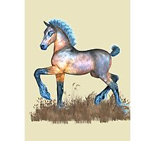 Foal with a spring in his step Photographic Print