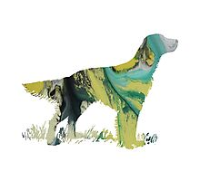 English setter  Photographic Print