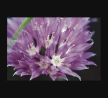 Macro Chive Blossom 4 Baby Tee