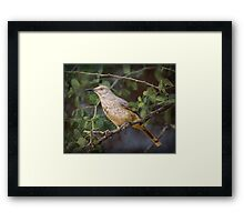 Curved-bill Thrasher: BL9A6330 Framed Print