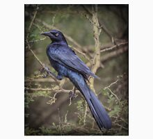 Great-tailed Grackle: BL9A5269 Unisex T-Shirt