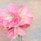 Afternoon Time With Pink Amaryllis  by daphsam