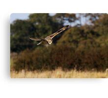 Owl Hunting Canvas Print