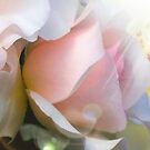 Pink Rose..Love, Gratitude, Appreciation by jewd barclay