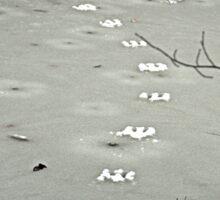 Tracks on a Frozen Creek. Sticker
