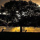 The Tree Of Life by Darren Clarke
