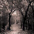 A walk in the forest by Darren Clarke