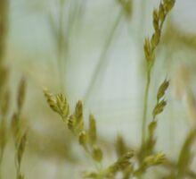 Grasses in the Breeze Sticker