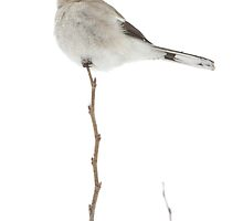 Shrike (on a stick) by Todd Weeks