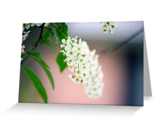 Spring Flower Series 31 Greeting Card