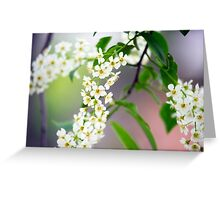 Spring Flower Series 32 Greeting Card