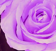 Violet Rose...Love & Enchanment by jewd barclay