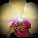 Orchid...Reverence & Humility by jewd barclay