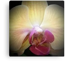 Orchid...Reverence & Humility Metal Print