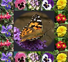 Painted Lady and Summer Flowers Collage by kathrynsgallery