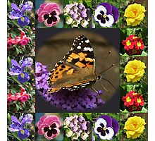 Painted Lady and Summer Flowers Collage Photographic Print