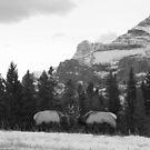 Elk fight by zumi