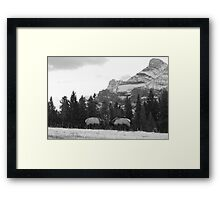 Elk fight Framed Print