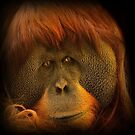 orangutan  by roger smith