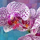 Phalaenopsis orchid with patchwork by Leonie Mac Lean