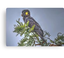 Yellow Tailed Black Cockatoo (2) Canvas Print