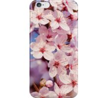 japanese sakura cherry blossom  iPhone Case/Skin