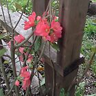 Pinky Flowers From The Garden by pinkyjainpan